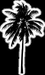 Mature Palm Tree Silhouette