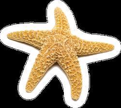 Mediterranean Starfish On A White Sticker