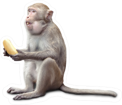 Monkey Sitting With Banana In His Mouth Sticker