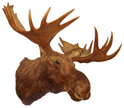 Moose Head Antler Sticker