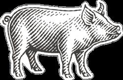 New Year 2019 Sign Zodiac Pig Sticker