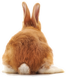 One Brown Rabbit Tail Sticker