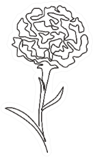 One Continuous Line Drawing Beauty Carnation Sticker