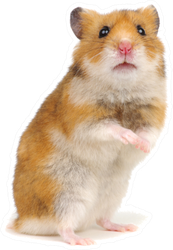 Orange Hamster Standing On Its Hind Legs Sticker