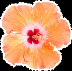 Orange Hibiscus Photo Flower Sticker