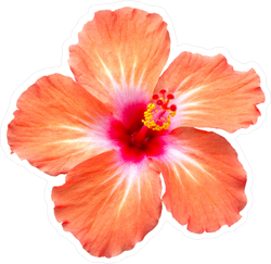 Orange Hibiscus Sticker
