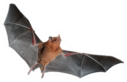 Orange Nectar Bat Sticker