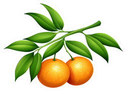 Oranges With Stem And Leaves Sticker