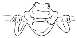 Outline Drawing Of A Frog Sketch Illustration Sticker