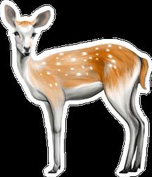 Painted Deer Sticker