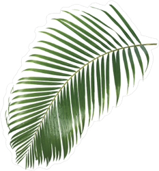 Palm Leaves Sticker