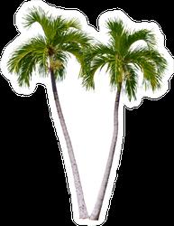 Palm Tree Pair Sticker