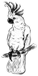 Parrot Cockatoo Sketch Sticker