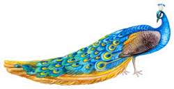 Peacock Bird Isolated Watercolor Illustration Sticker
