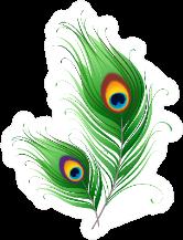 Peacock Feathers Illustration Sticker