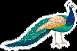 Peacock On White Background Hand Drawn Sticker