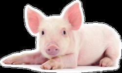 Pig Baby Sticker