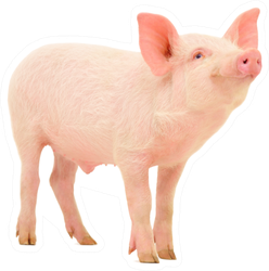 Pig Who Is Represented On A White Sticker