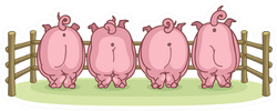 Pigs Back View Sticker