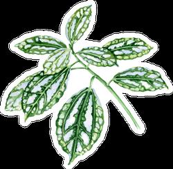 Pilea Leaves Tropical Plant Botanical Watercolor Sticker