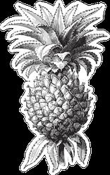 Pineapple Vintage Illustration Sticker