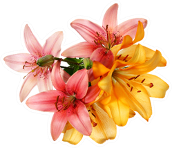 Pink And Orange Lilies Isolated On White Sticker