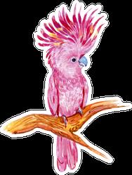 Pink Cockatoos, Exotic Birds In Watercolor Sticker