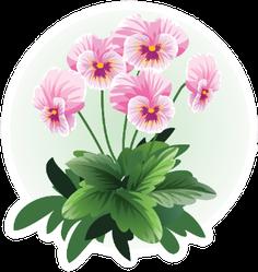 Pink Pansy Viola Flower Illustration Sticker