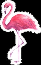 Pink Rose Flamingo Sticker
