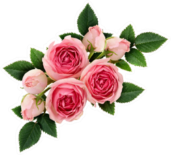 Pink Rose Flowers Arrangement Isolated On White Sticker