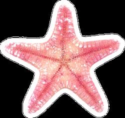 Pink Starfish On White Sticker