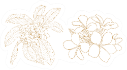 Plumeria Flower Outline Illustration Sticker