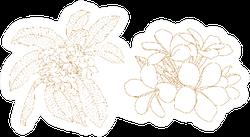 Plumeria Flower Outline Illustration Sticker