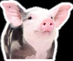 Portrait Of A Cute Cheerful Pig Sticker