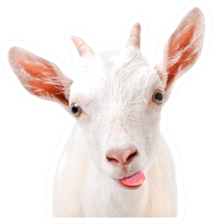 Portrait Of A Funny Goat Showing Tongue Sticker