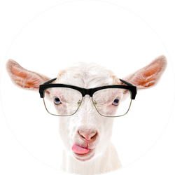 Portrait Of A Goat In Glasses Showing Tongue Sticker