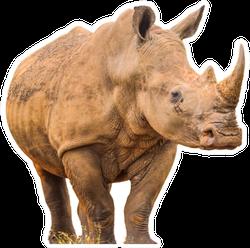 Portrait Of A Large White Rhinoceros Sticker