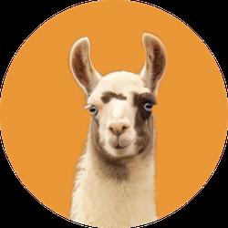 Portrait Of A Llama Isolated On Orange Sticker