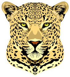 Portrait Of A Spotted Cheetah Sticker