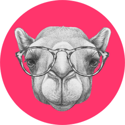 Portrait Of Camel With Glasses Pink Sticker