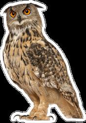 Portrait Of Eurasian Eagle-Owl Sticker