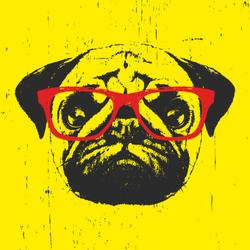Portrait Of Pug Dog With Glasses Sticker