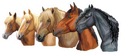 Portraits Of Horses Breeds Looking In Profile Sticker