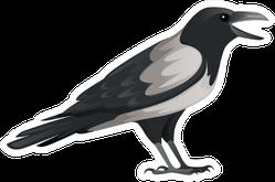 Predatory Bird Adult Black And Gray Crow Cartoon Sticker
