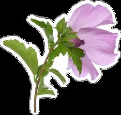 Pretty Purple Hibiscus Sticker