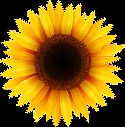 Pretty Sunflower Sticker