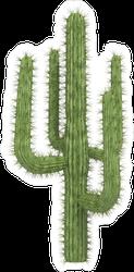 Prickly Tall Cactus Sticker