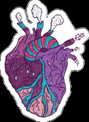 Purple Anatomic Heart In Harmony With Nature Hand Drawn Sticker