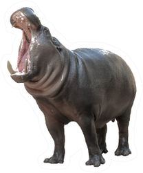 Pygmy Hippo Opening Mouth Sticker