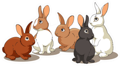 Rabbits In A Group Sticker